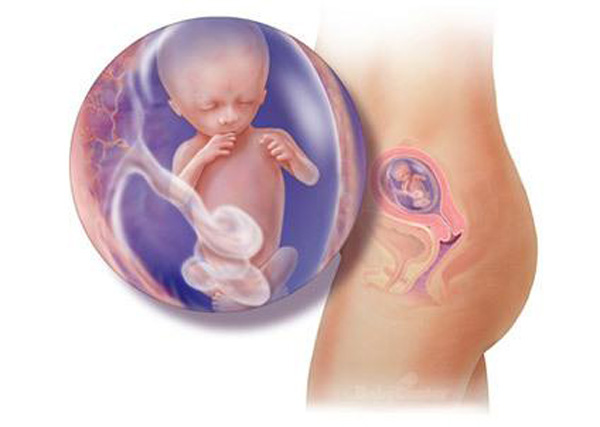 thai nhi tuần 16: Bé có thể xoay chuyển các khớp