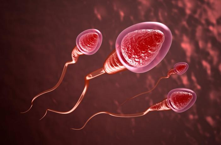quá trình hình thành thai nhi giai đoạn thụ tinh