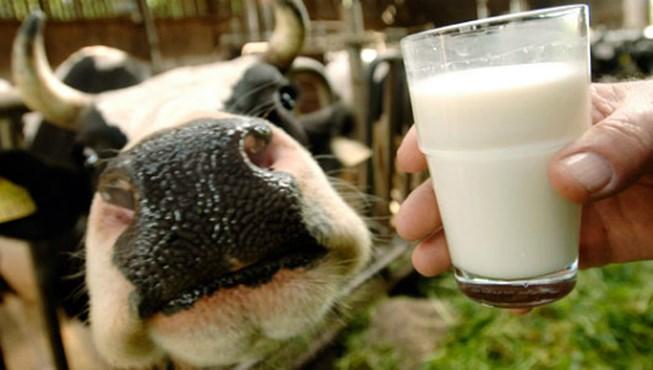 Mang thai nên hạn chế dùng sữa, bơ, phomai chưa qua tiệt trùng