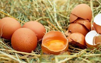 Trứng gà chứa nhiều chất dinh dưỡng tốt cho mẹ bầu 2 tháng