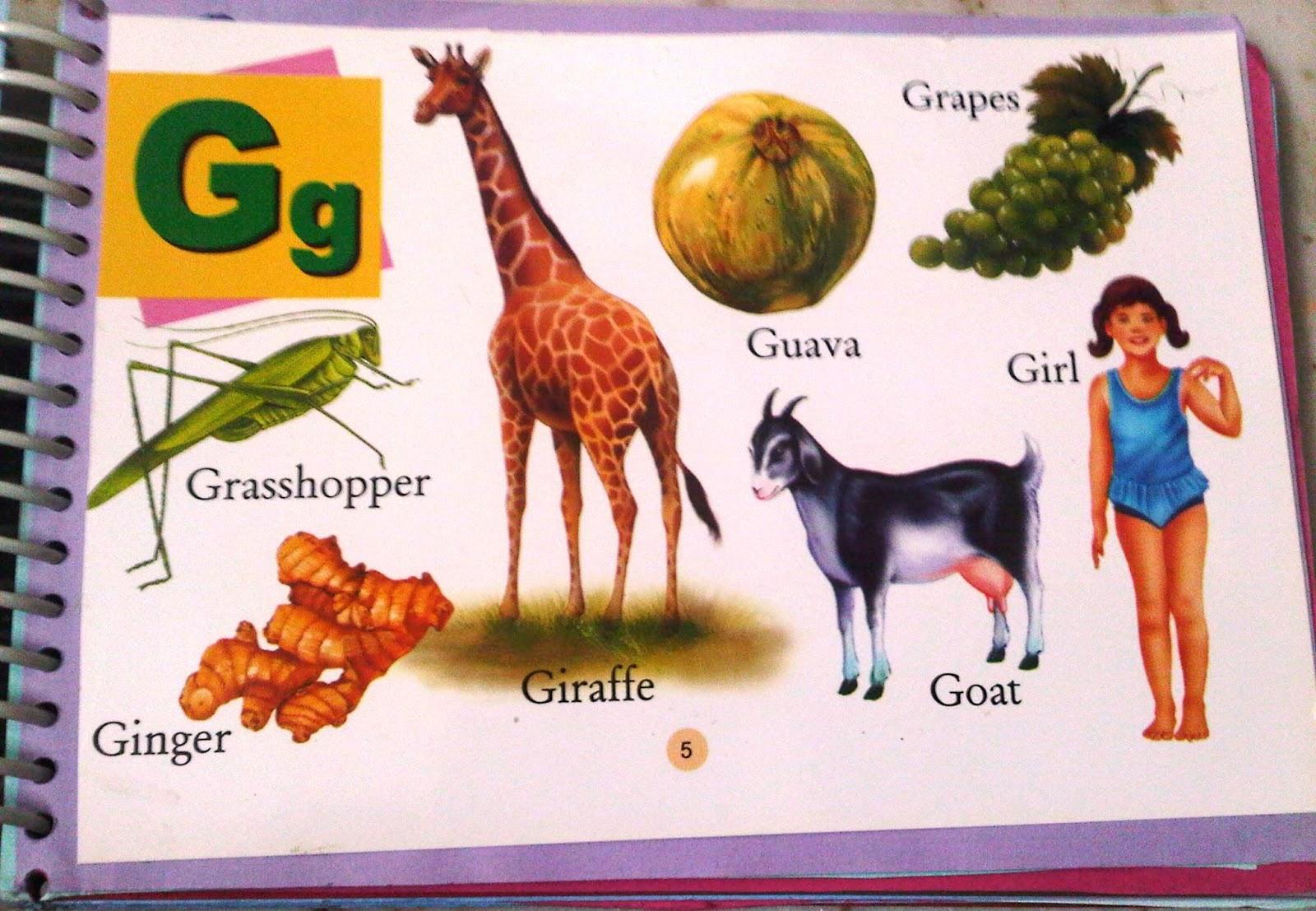 Dạy tiếng Anh qua tranh ảnh giúp bé dễ ghi nhớ nghĩa của từ