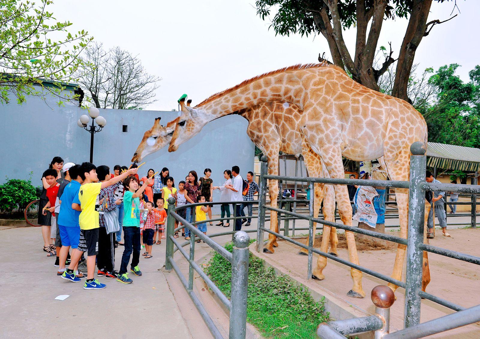 Tiếp cận trực tiếp các con vật ở sở thú giúp trẻ ghi nhớ kiến thức sinh động hơn