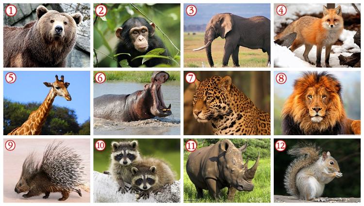 Các tranh ảnh thực giúp bé nhớ tên gọi và hình dạng của động vật