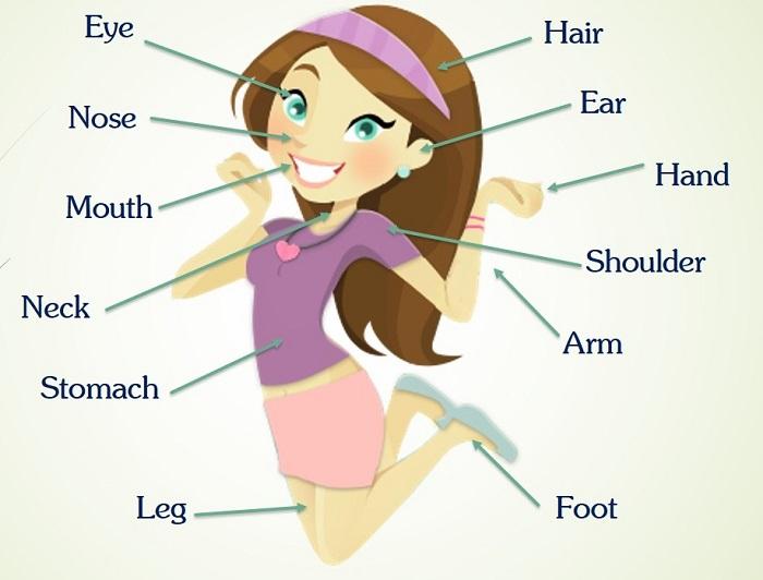 Tiếng Anh trẻ em theo chủ đề cơ thể người có từ vựng rất gũi gũi với các bé