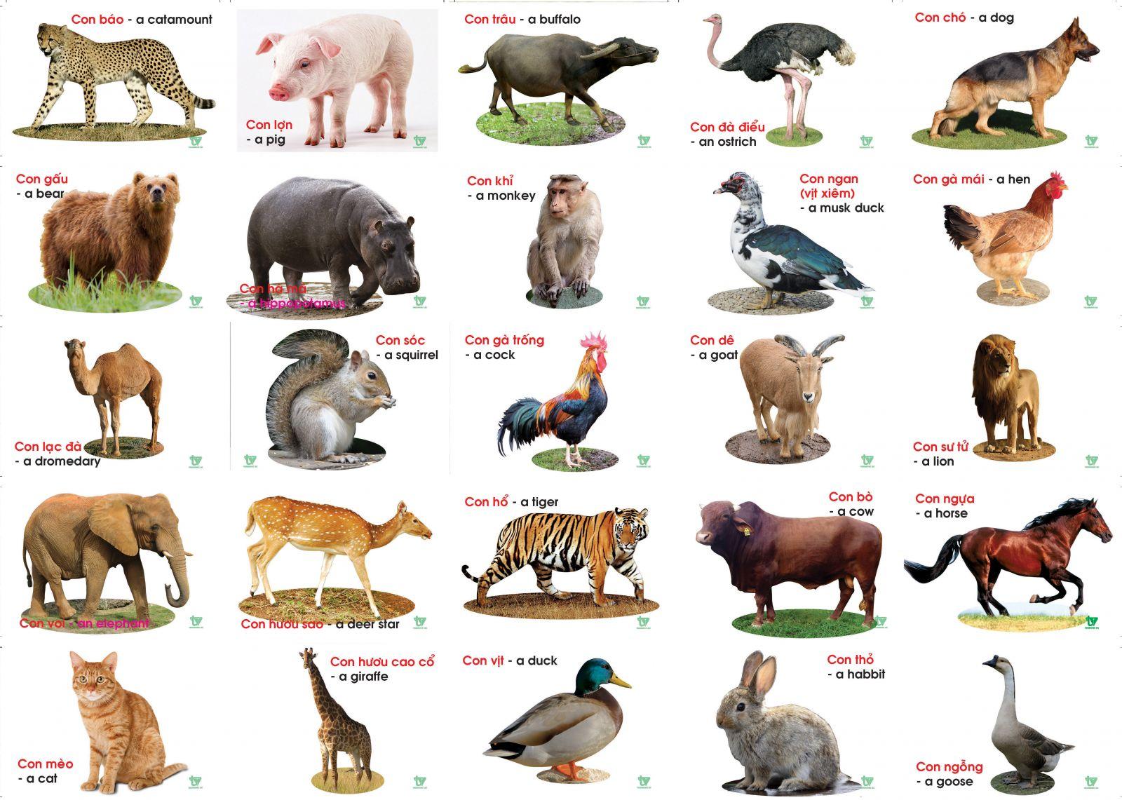 Tiếng Anh trẻ em theo chủ đề con vật nên có minh hoạ hình ảnh thật để bé có thêm kiến thức mới