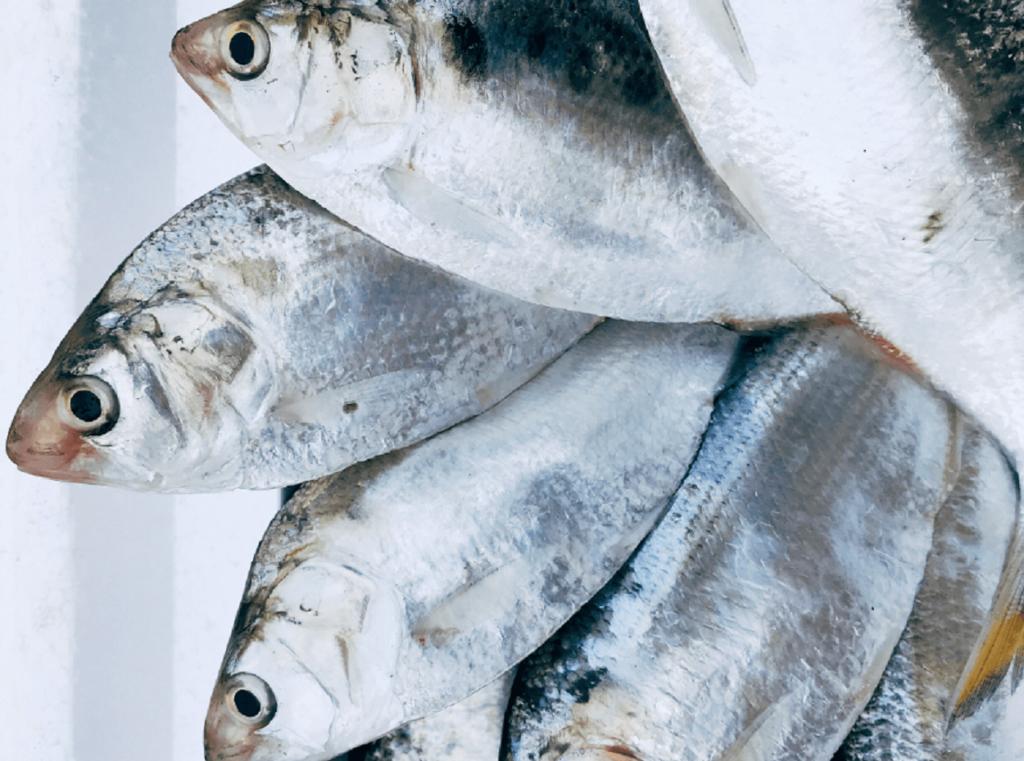 Cá mòi là loại thực phẩm sạch và giàu dinh dưỡng