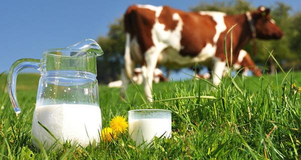 Trong sữa bò có rất nhiều chất béo