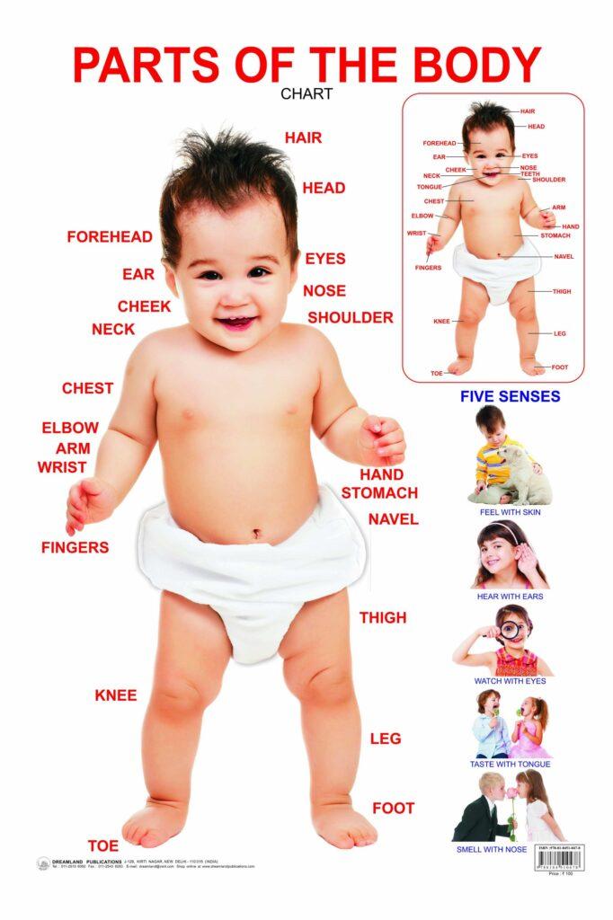 Chủ đề body thương gây hứng thú cho trẻ nên trẻ rất mau thuộc từ