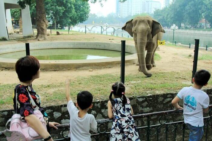 Đi chơi Tết ở Hà Nội tại công viên Thủ Lệ là lựa chọn tiết kiệm cho cha mẹ