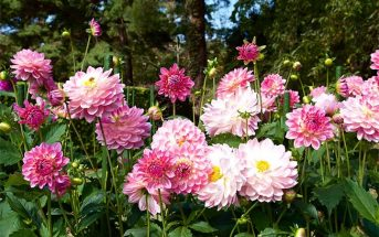 type flowers english vocabulary
